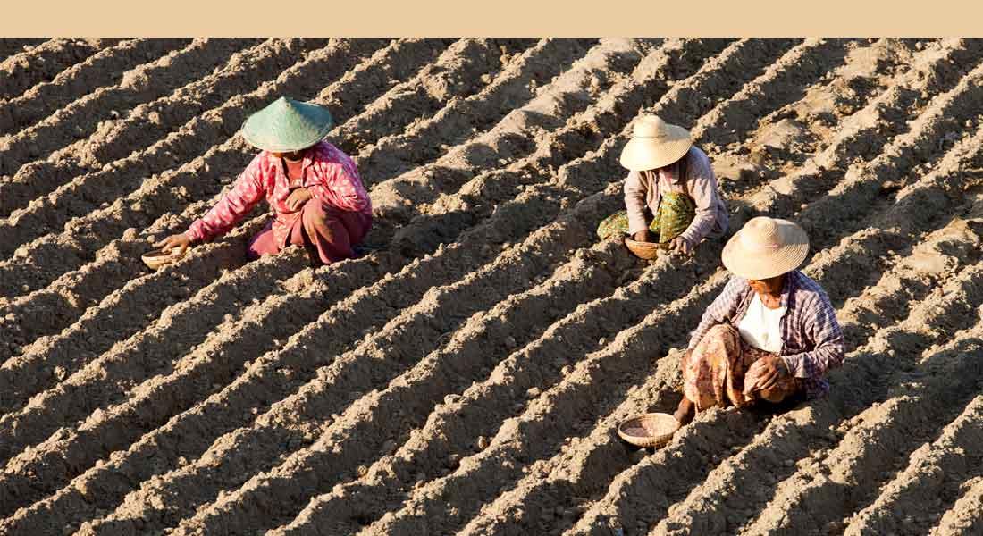 Farmers in field, Asia